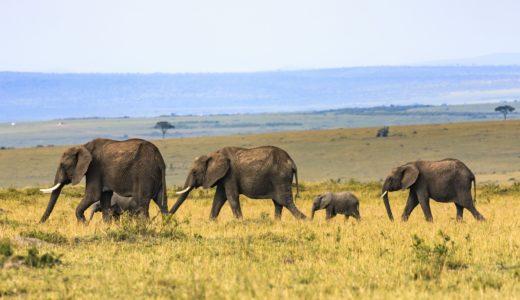 ケニアで日本人観光客がエムペサ使えるのか考えてみた