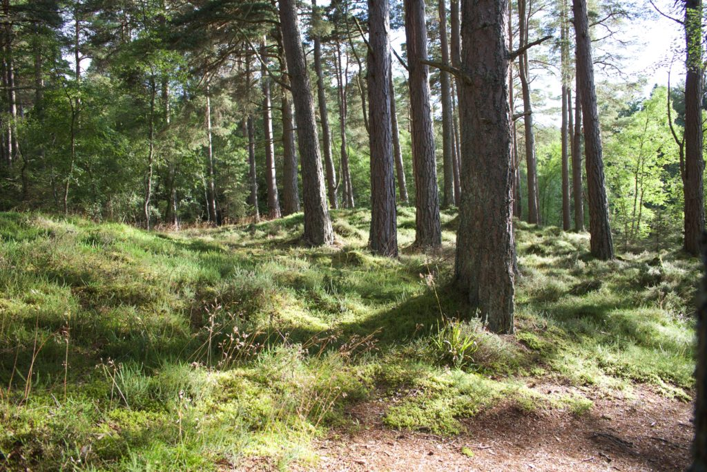 森林公園の森?