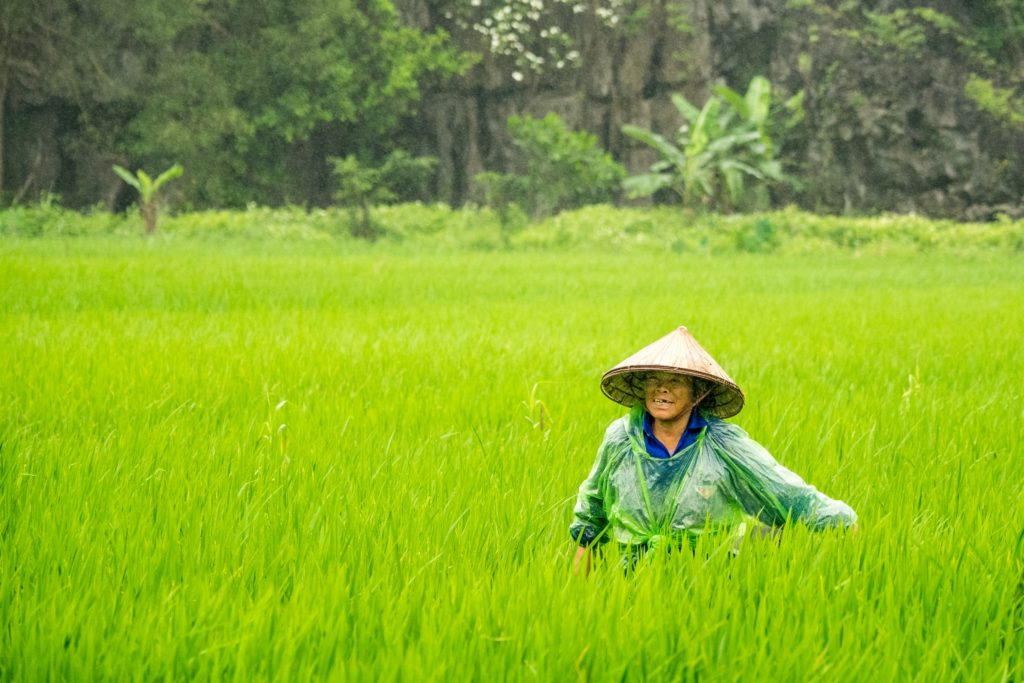 多分インドネシアあたりの稲作
