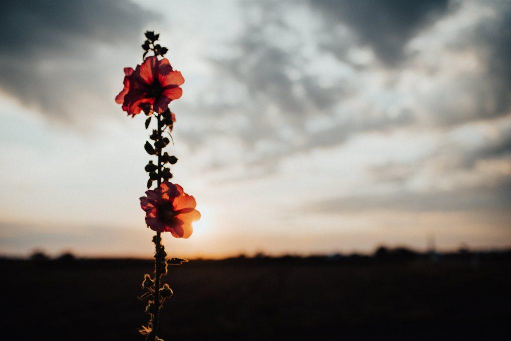 夕焼けの荒野に咲いてる花