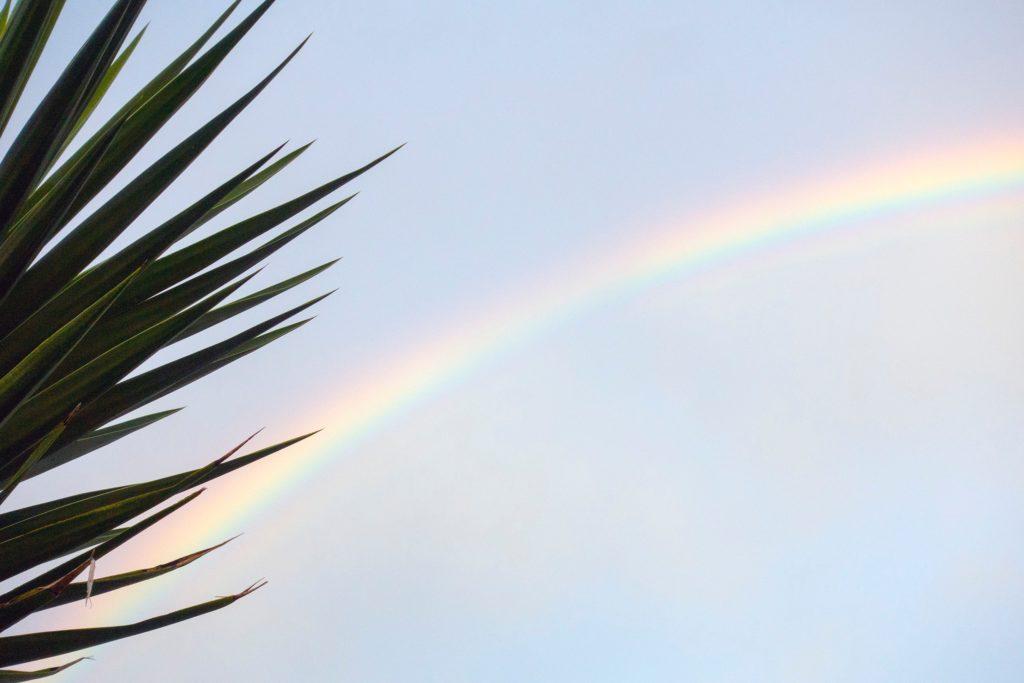 ヤシの木の向こうの虹