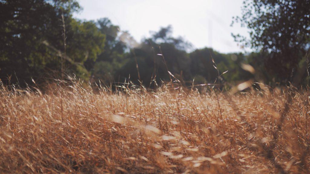 枯れた草原