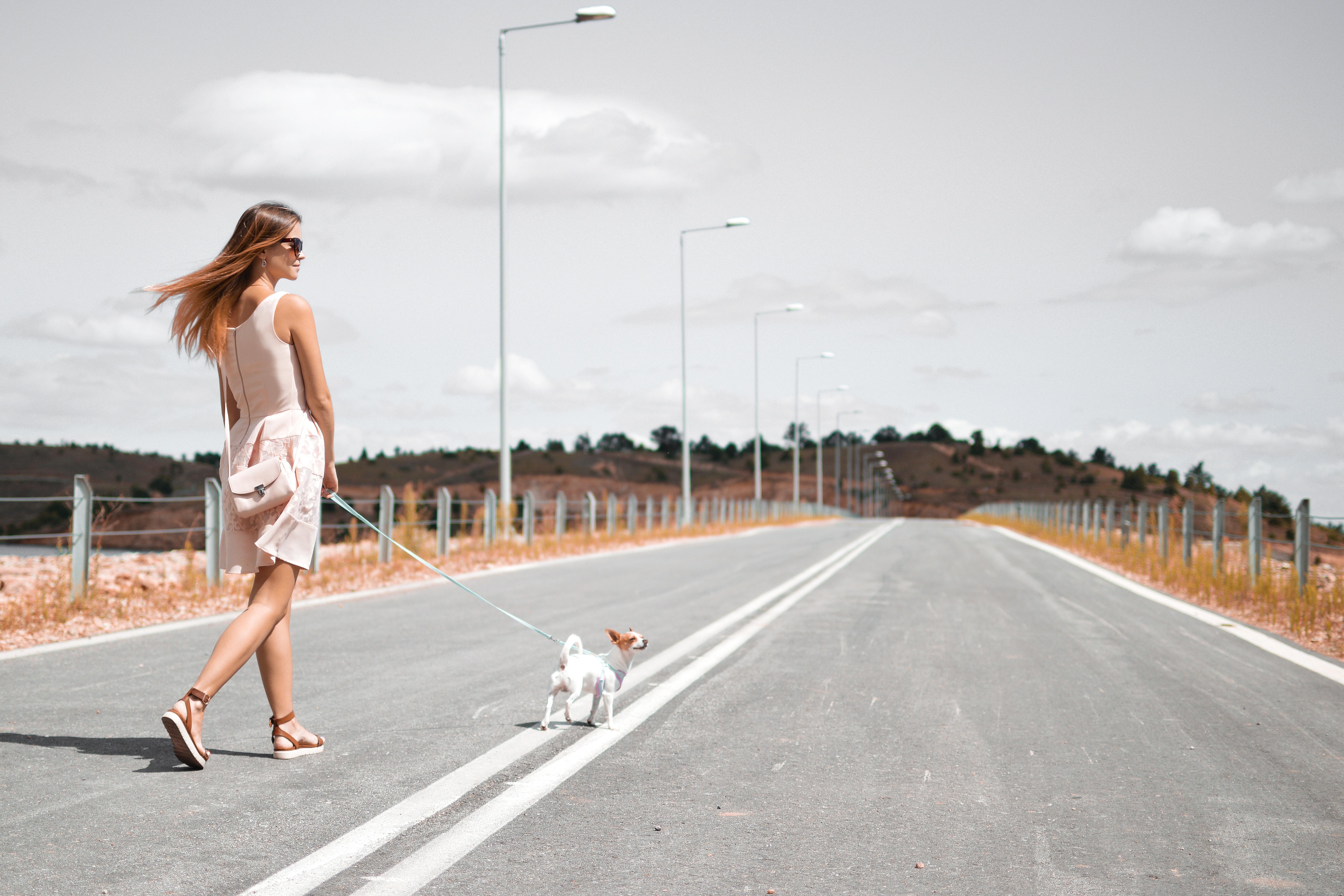 道路を歩いてる女性と犬