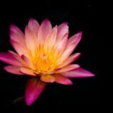 暗い中の花