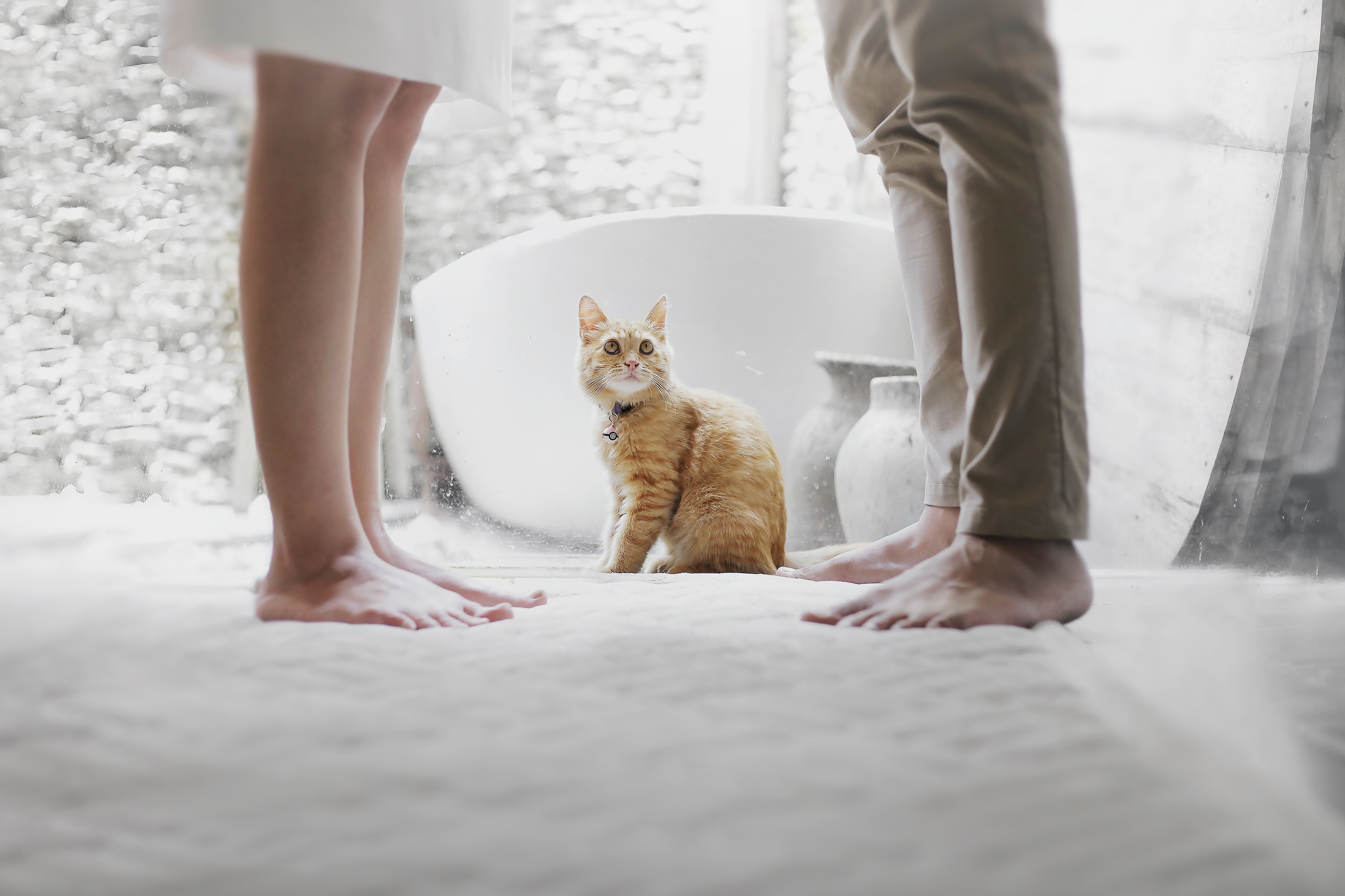 二人の行為を見つめる猫