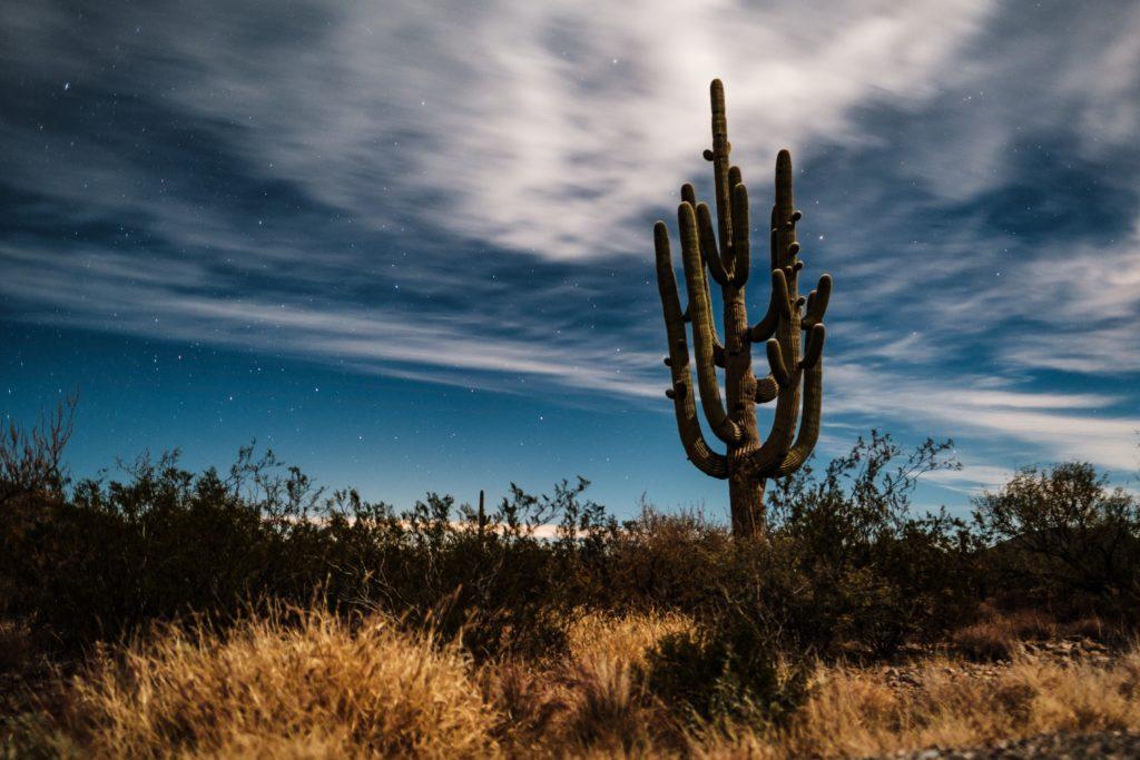 アリゾナの荒野