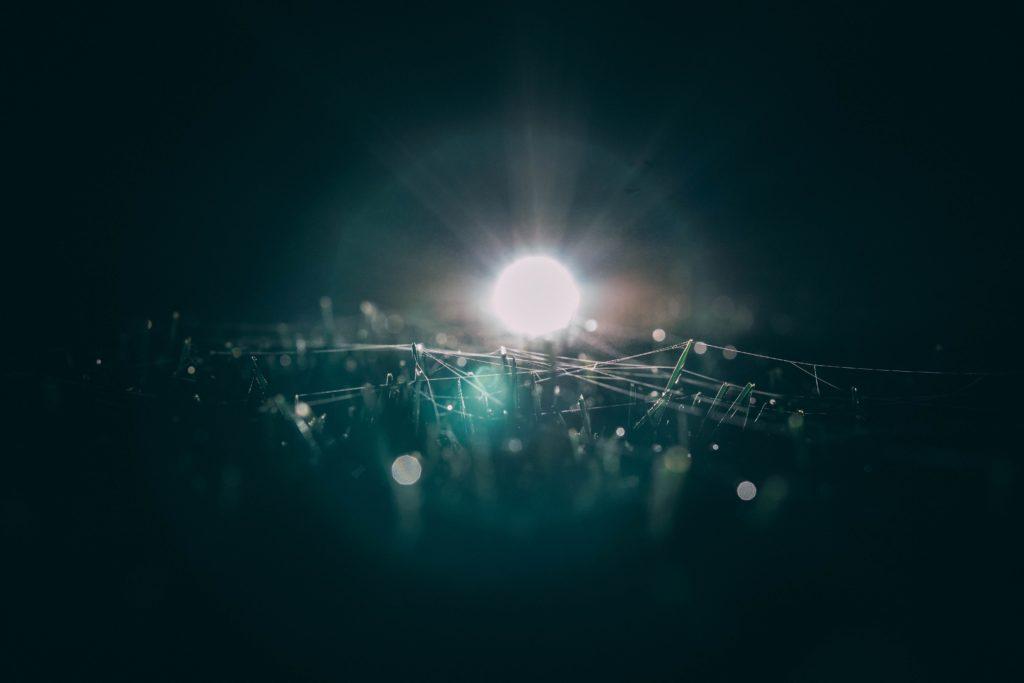 夜中の蜘蛛の巣