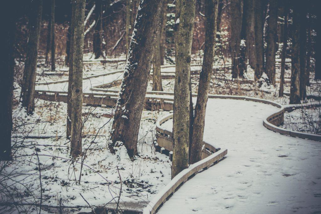残雪の残る森