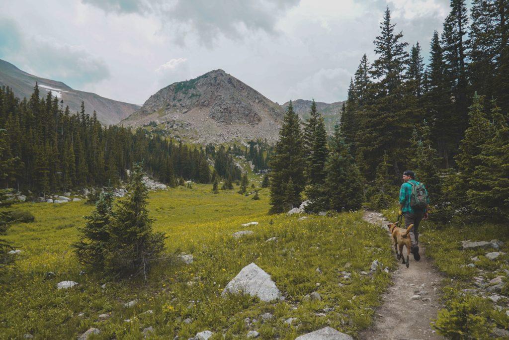 高原へ犬と散歩