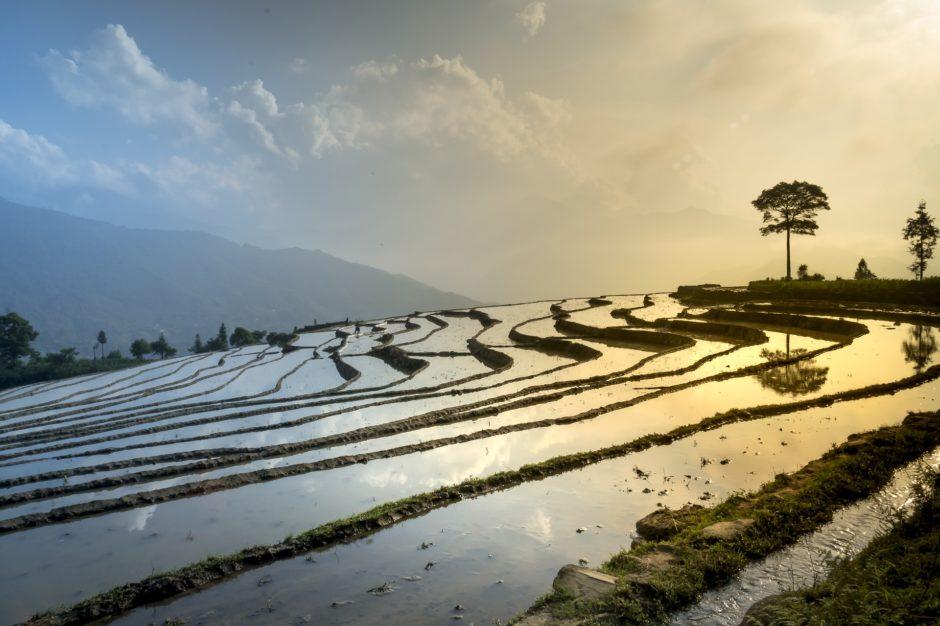 東南アジアの田んぼ?