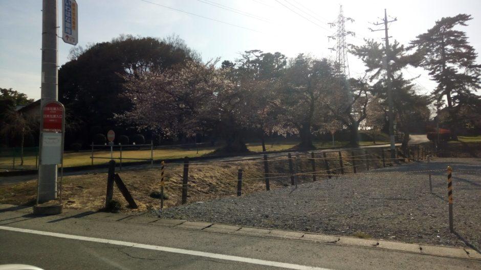 高崎市岩鼻町の桜