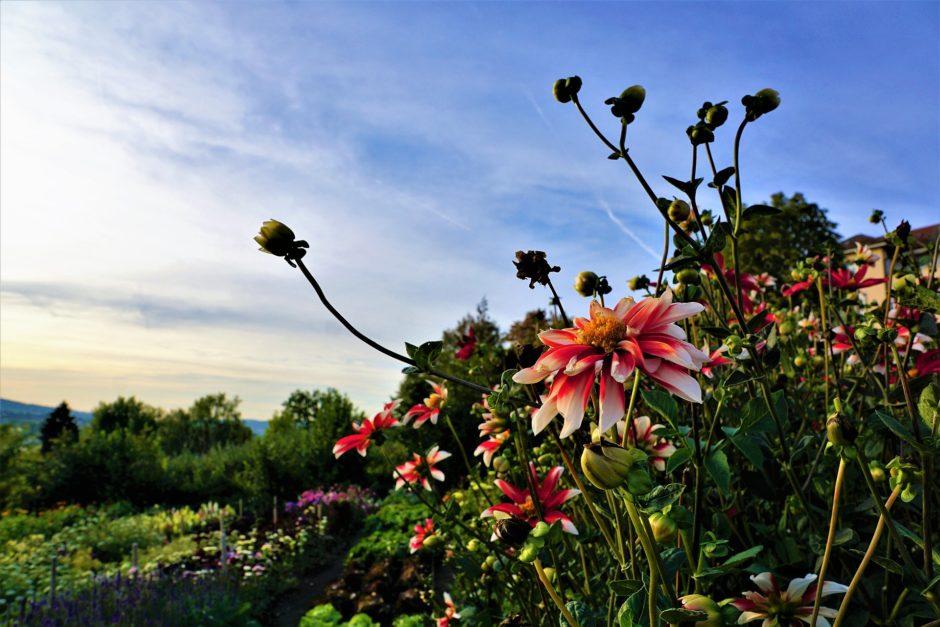 イタリアの花