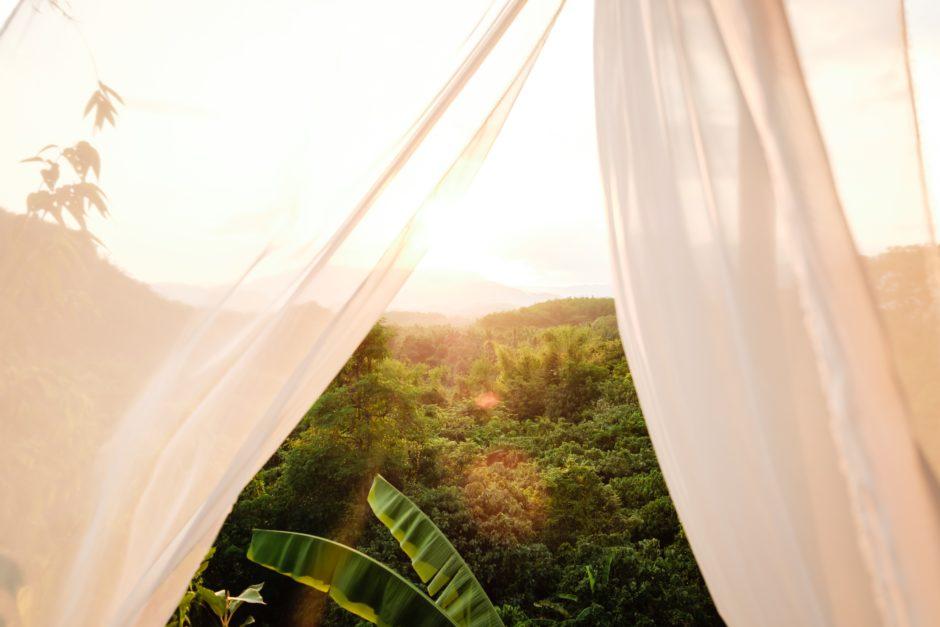 ジャングルの中の別荘