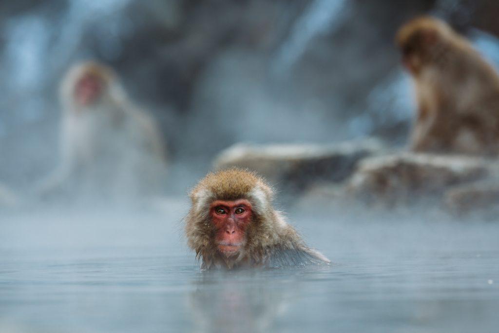 温泉につかってるお猿さん