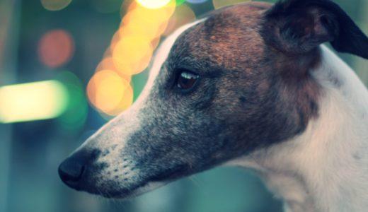 【新型コロナウイルス】犬もPCR検査で陽性らしい