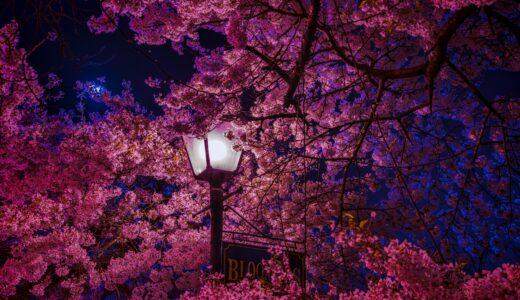 【桜花賞2021】やはり阪神JF組が強かった【回顧】